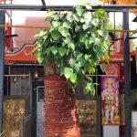 City Faith - A Tree's New Life, Shiv Temple, Vinay Marg