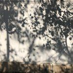 City Hangout - Watching Shadow Leaves, Kasturba Gandhi Marg