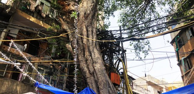 City Landmark - Peepal Tree, Tiraha Behram Khan