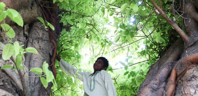 City Landmark - The Summertime Pilkhan Tree, Feroz Shah Kotla
