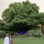 City Landmark - Paakar Tree, Constitution Club of India, Central Delhi