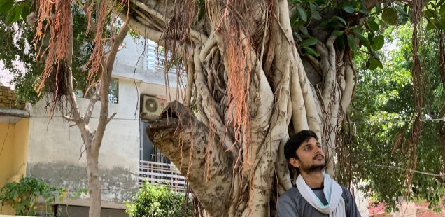 City Landmark - The Banyan Tree, Shiv Park, Jacobpura