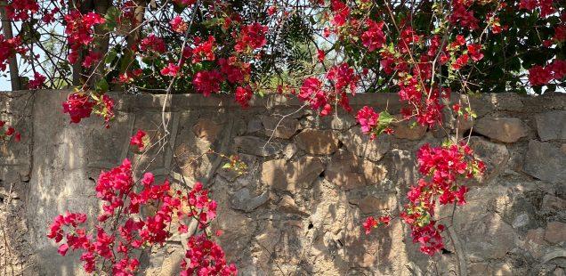 City Season - Bougainvillea, Udyog Vihar, Gurgaon