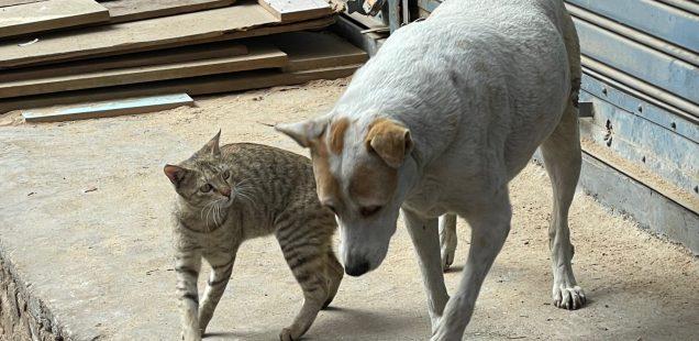 City Moment - Dog Loves Cat, Near Golcha Cinema